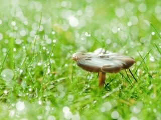 Bruine paddenstoel herfst bokeh