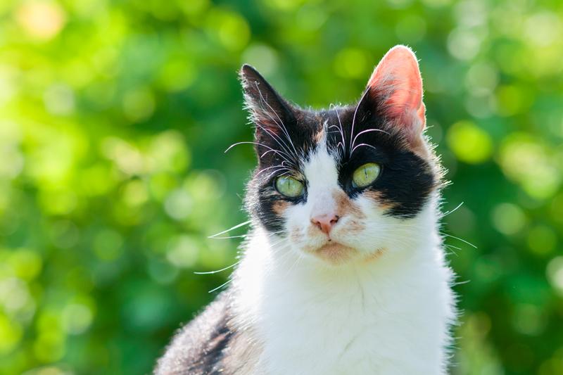 Kat met een zachte groene achtergrond bokeh