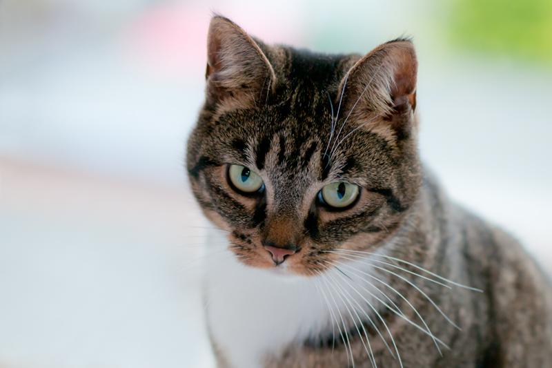 Portret kat zachte achtergrond