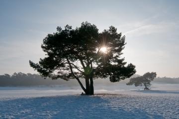 Soester Duinen - Zonnige winterochtend