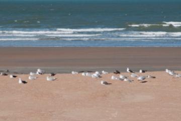 Westende meeuw strand zee