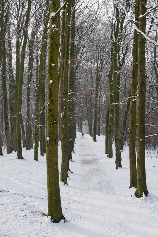 Sonsbeekpark Arnhem winter