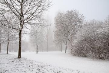 Winterochtend Zevenaar
