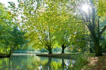 Zevenaar - Zonnige herfstochtend in het park