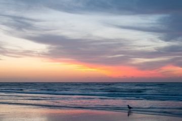 België Westende - Zonsondergang strand meeuw