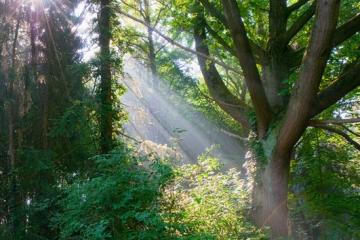 Zevenaar - Zonsopkomst Gimbornhof