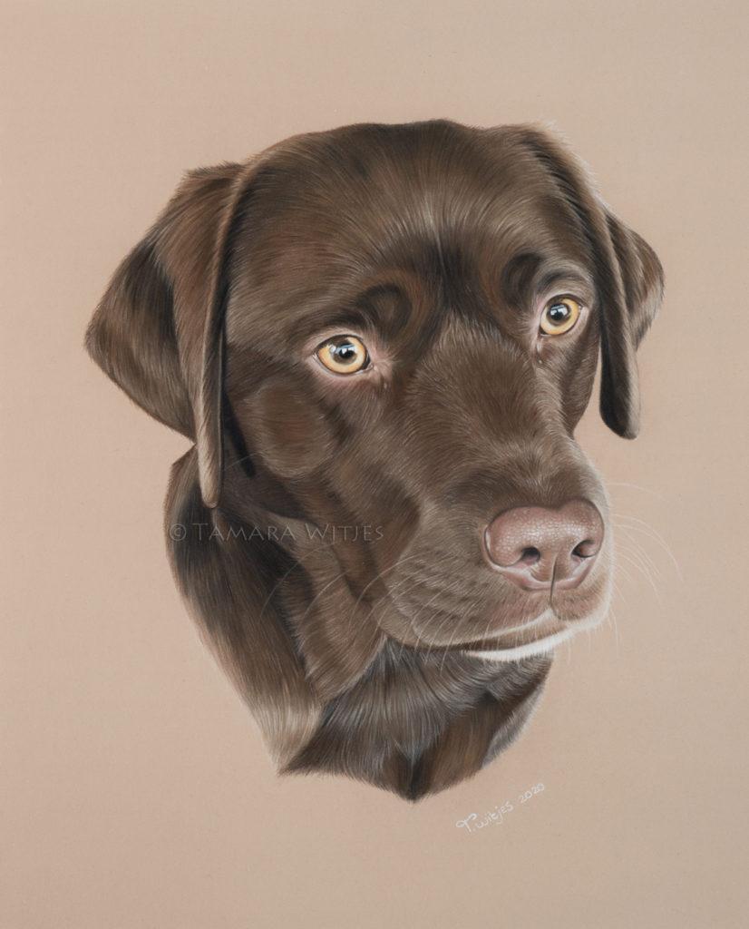 pasteltekening hond labrador