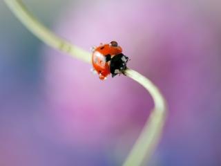 Lieveheersbeestje druppels kleurrijk