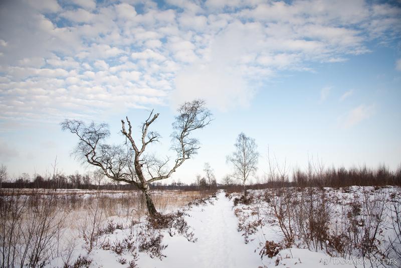 Winter pad Aamsveen