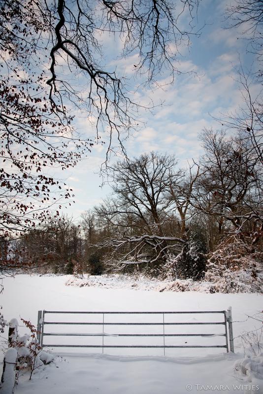 Winter Aamsveen
