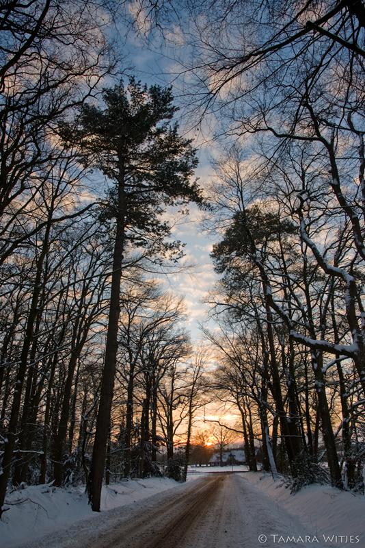 Winter bospad zonsondergang