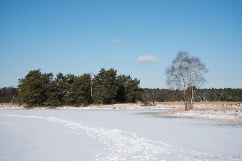 Winter het Buurserzand