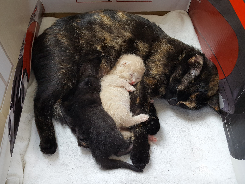 moederpoes met kittens