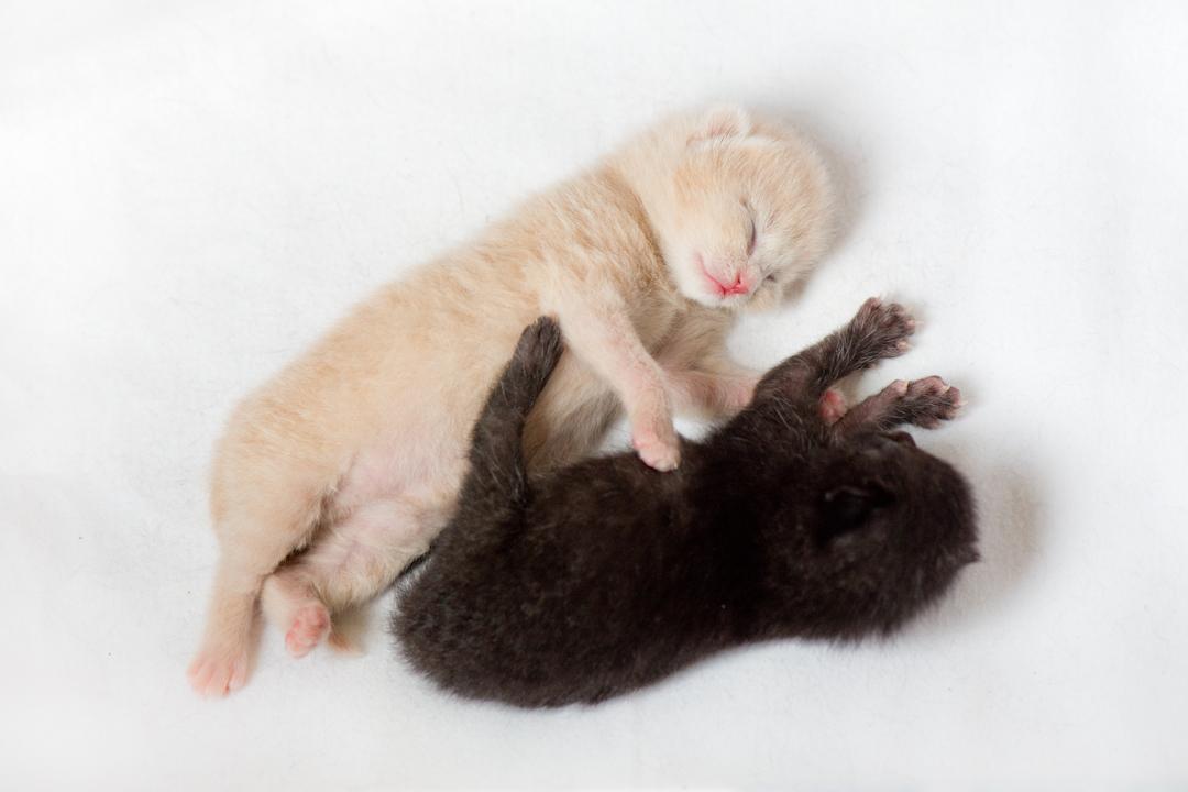 kittens schattig